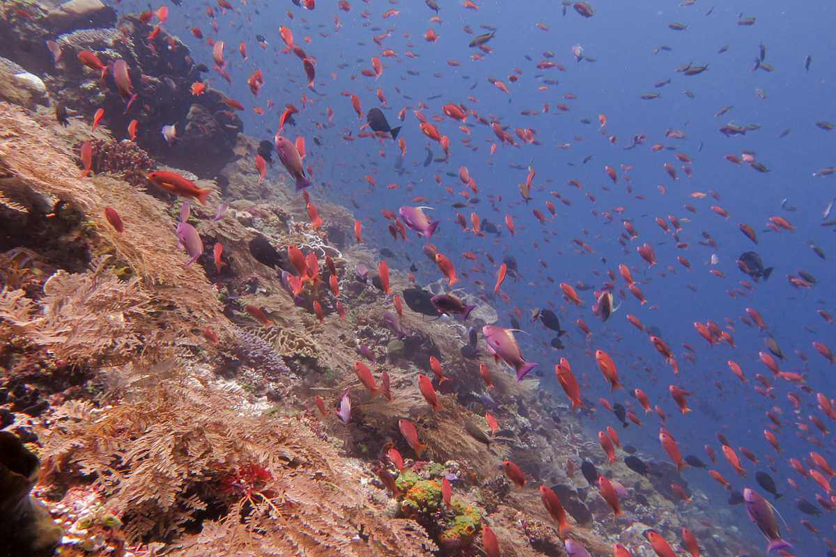 diving in Alor archipelago