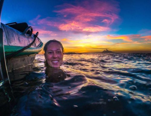 From Darwin to Finding Nemo – by Megan Meyers