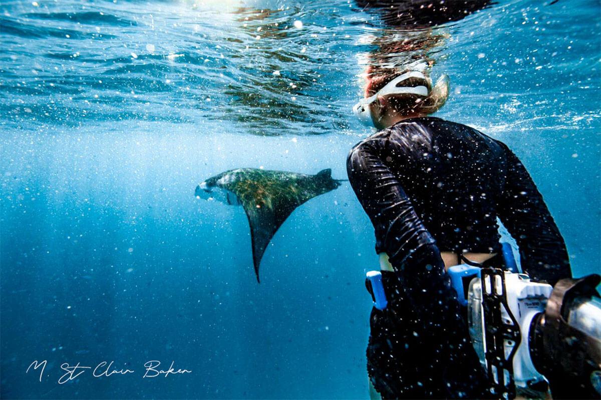swimming with Mantas of Komodo