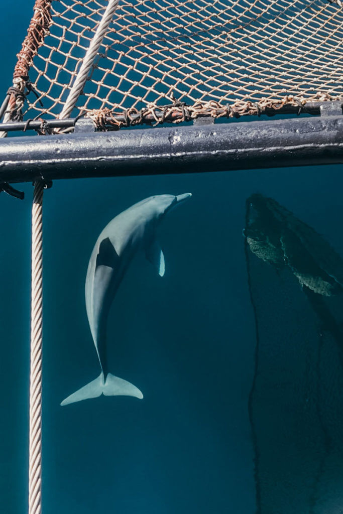 swimming with dolphins aboard Adelaar