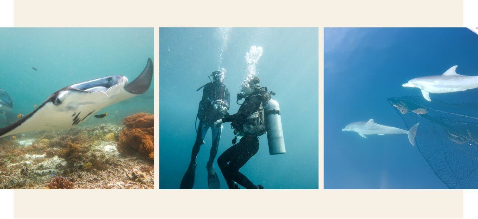diving Liveaboard experience