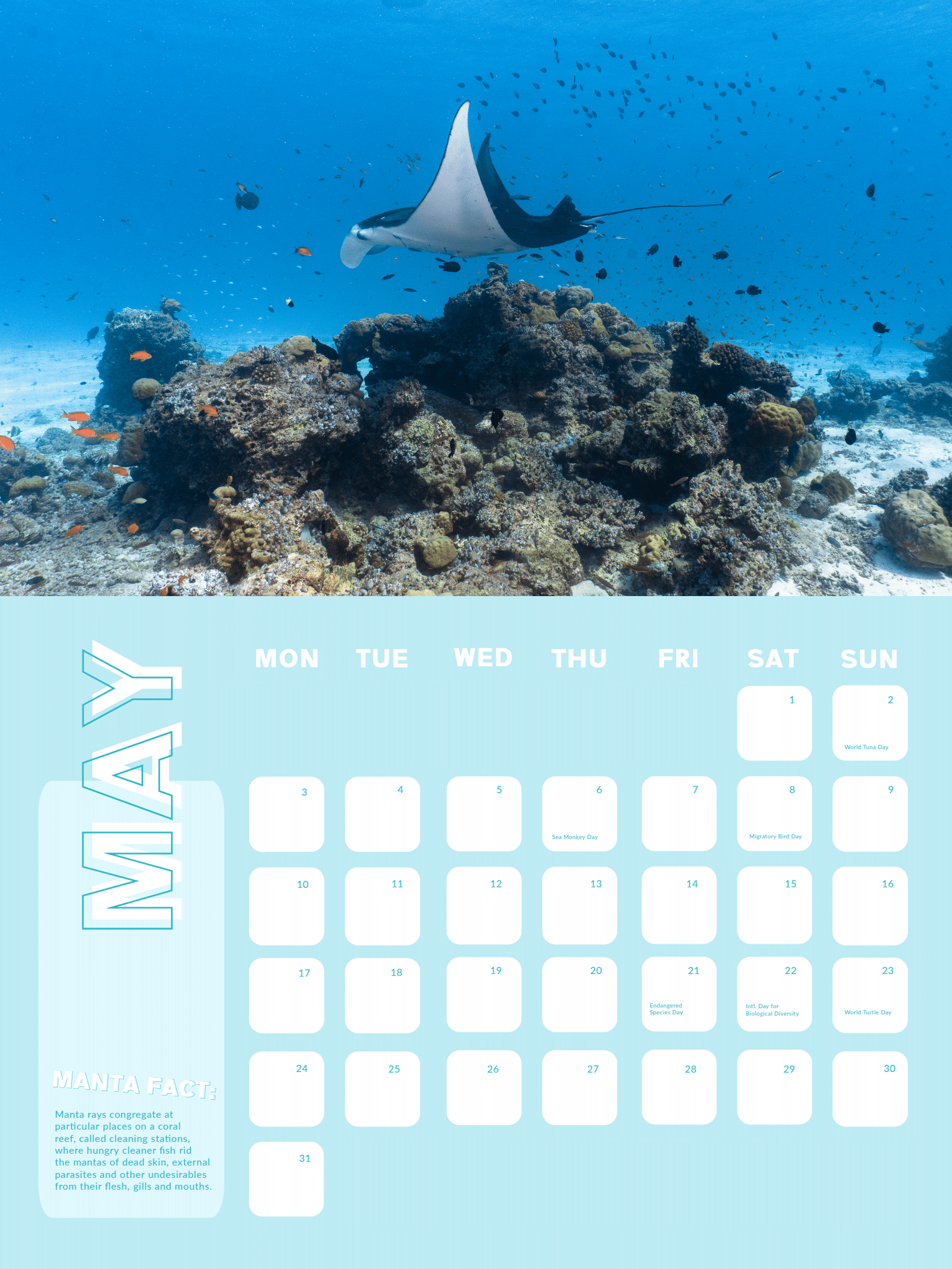 Manta Ray Calendar 2021