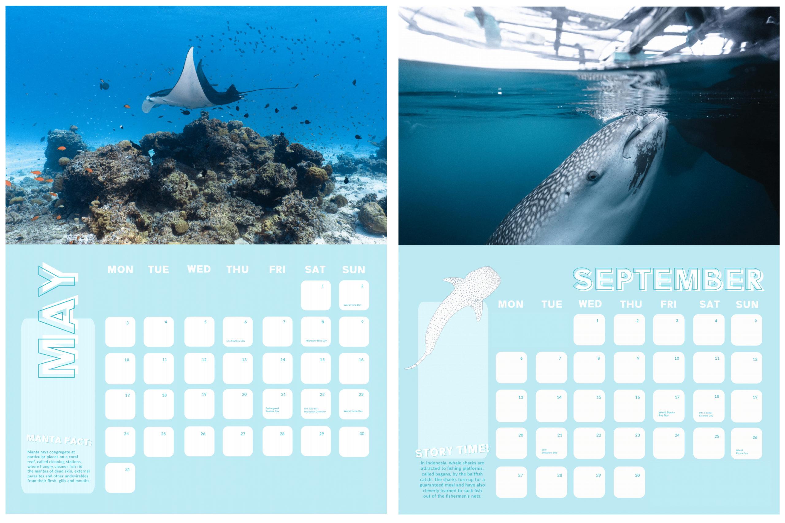 whale sharks and manta rays calendar