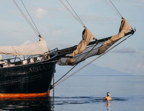Tropical water diving, memories of Indonesia