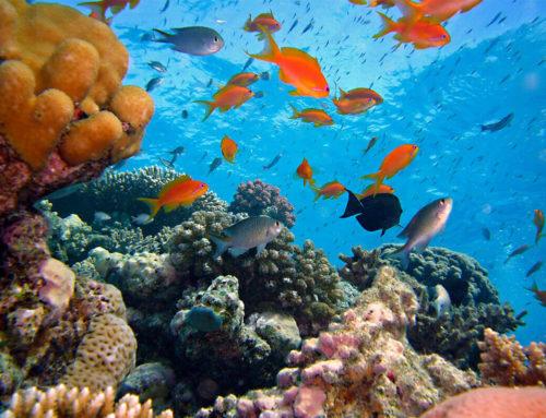 Top Dive Spots of Indonesia: Tatawa Kecil