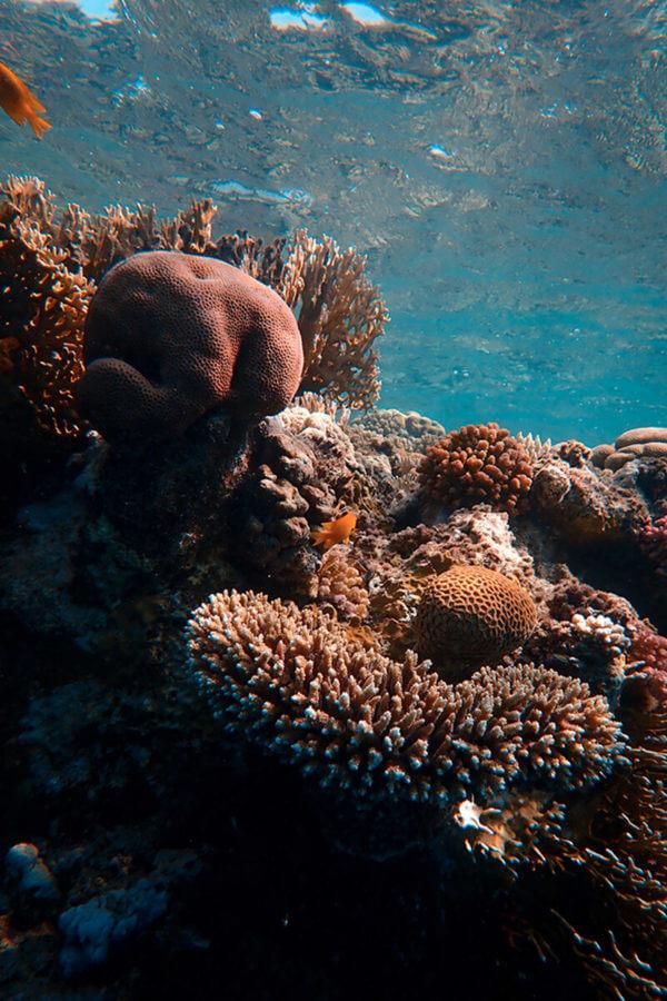 diving at tatawa kecil
