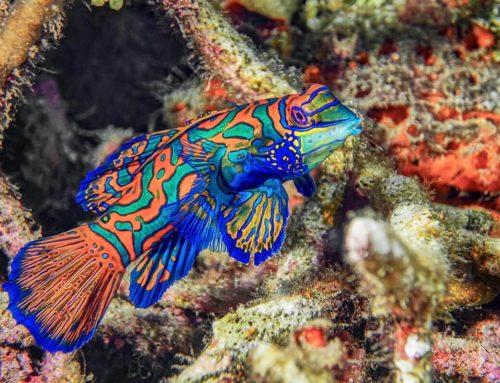 Top Dive Spots of Indonesia: Pasarwajo Bay