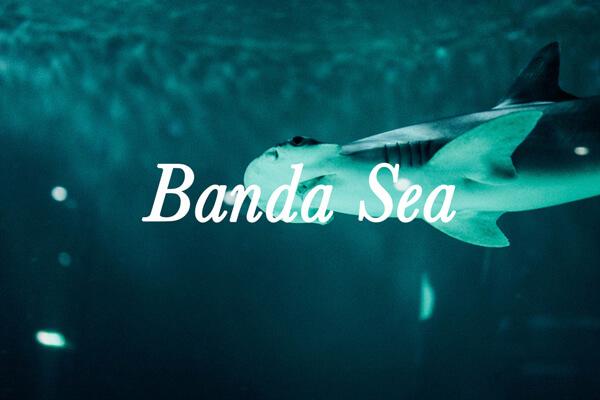 croisière de plongée Mer de Banda