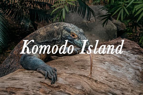 croisière de plongée Komodo
