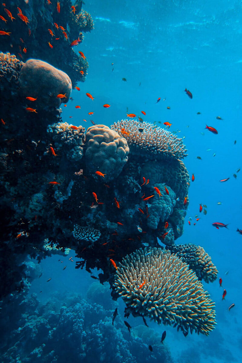Coral reef conservation Indonesia